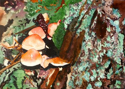 Marian Wiseman: Alaska Mushrooms