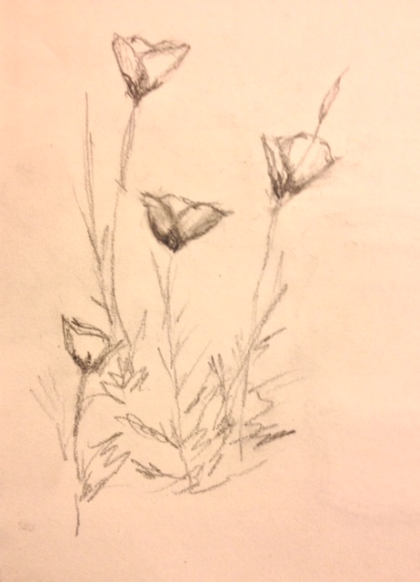 "Eileen Leahy: ""Evening Primroses,"" pencil"