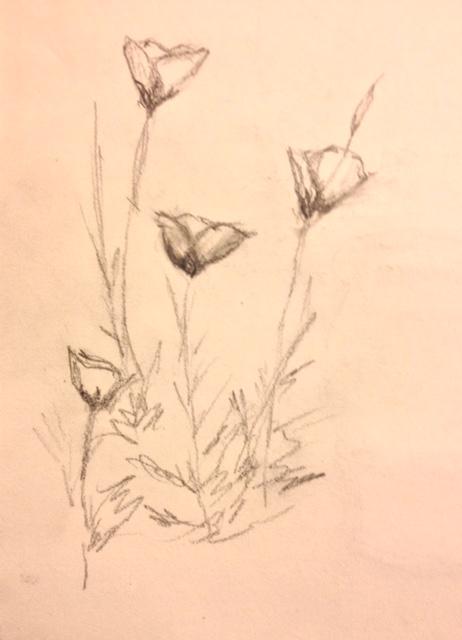 "Eileen Leahy: ""Evening Primroses,"" pencil"