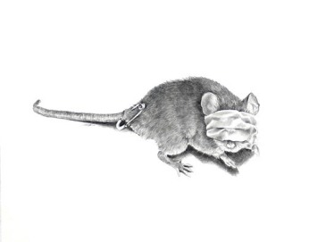 Ellen Cornett: One Blind Mouse. Carbon pencil.