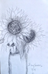Eileen Leahy: Sunflowers, Pencil.