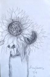 Eileen Leahy: Sunflowers, Pencil.