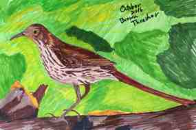 Marian Wiseman: Brown Thrasher. Sharpie markers.