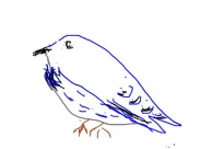 "Eileen Leahy: Mountain Bluebird. iPhone 4s ""Draw Pad"" app."