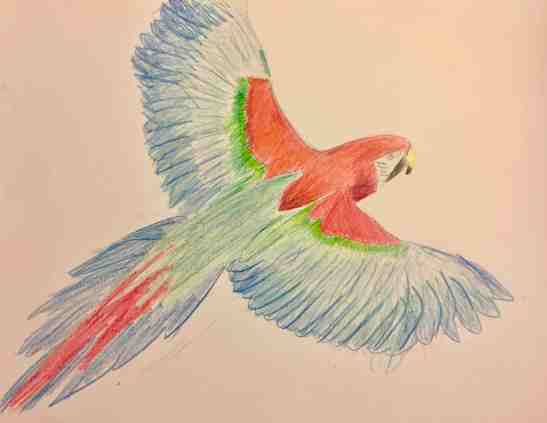 2016 Parrot in colored pencils