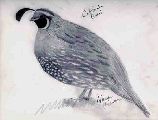 2016-caifornia-quail