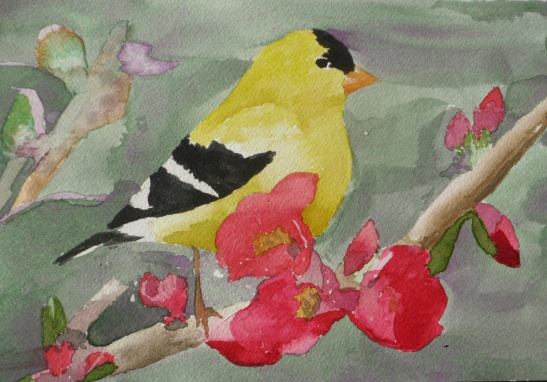 2013 1 Goldfinch