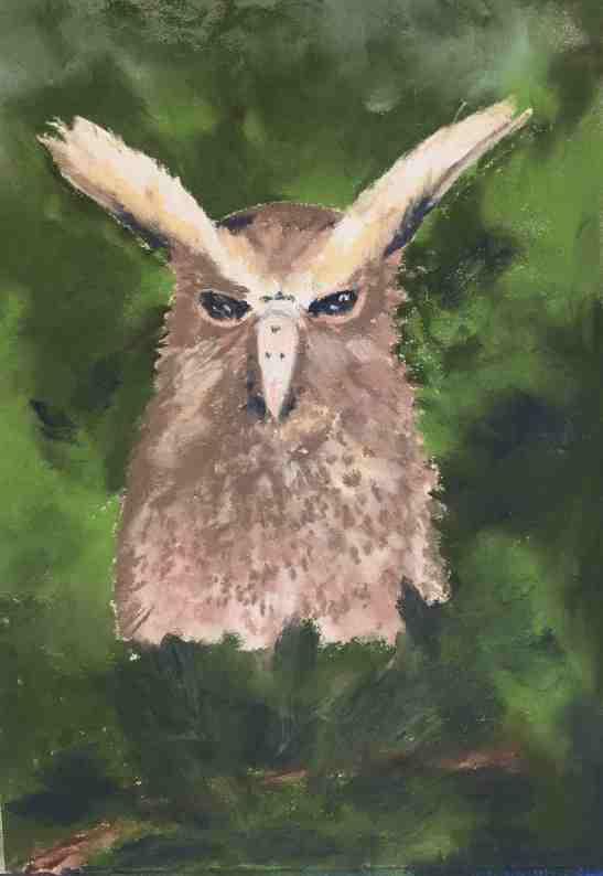 anne-shields-ecuadorian-owl-pastels