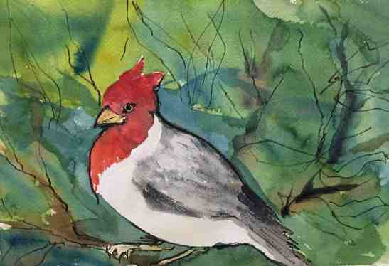 kay-elsasser-brazilian-cardinal-watercolor