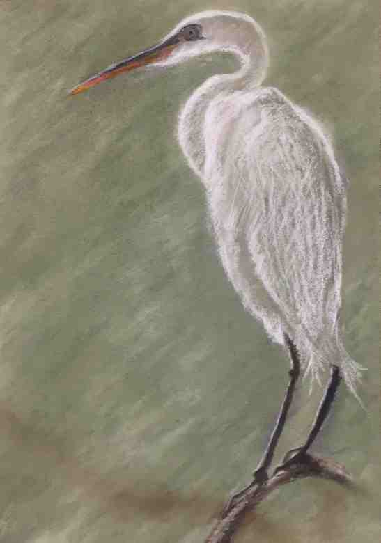 pat stocks great-egret-pastels