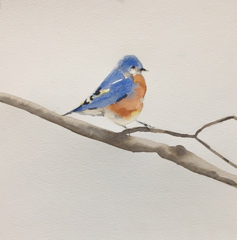 tara-hamilton-bluebird-watercolor