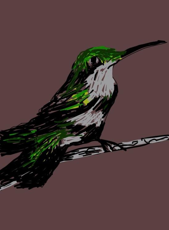 Tara Hamilton Hummingbird iPad
