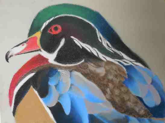 Linda Andreatta wood duck pastels