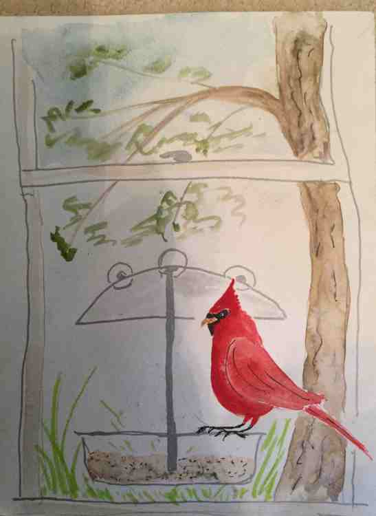 Anne Shields Cardinal at My Window watercolor and ink