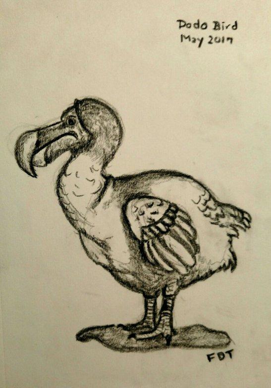 Fran Tomllinson Dodo Bird--carbon pencil