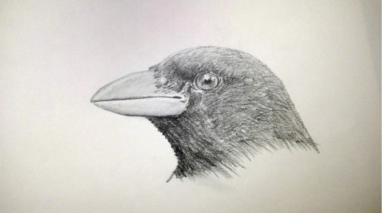 Richard Slayton Bird pencil