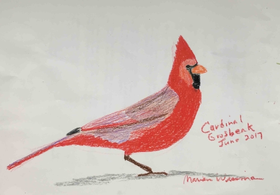 Marian Wiseman West Virginia Cardinal crayon and colored pencil