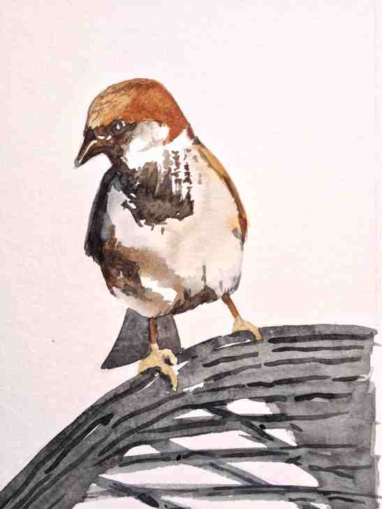 Tara Hamilton Hill Sparrow watercolor