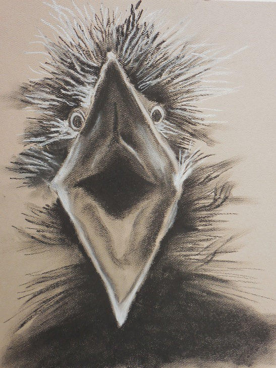 Linda Andreatta Baby Night Heron Charcoal