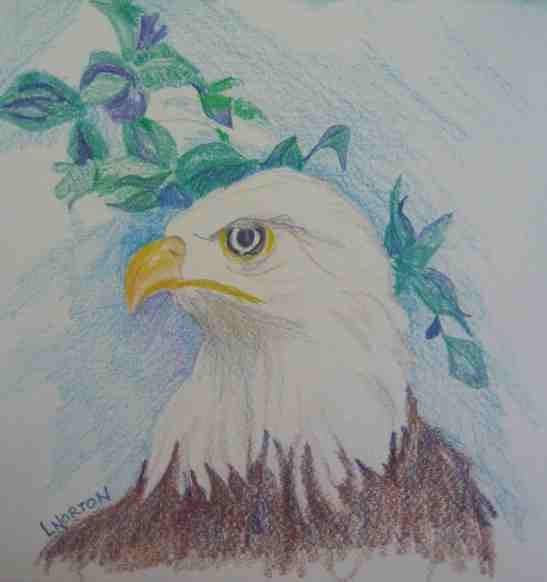 Linda Norton Bald Eagle colored pencil