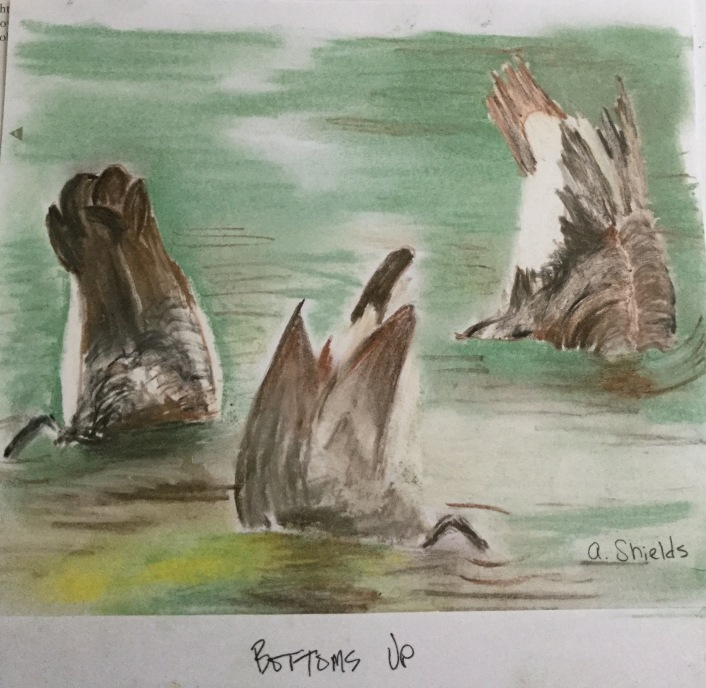 Anne Shields Bottoms Up Pastel pencils, from a photo in the Boston Globe of ducks diving for food