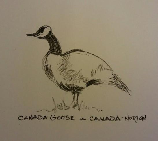 Linda Norton Canada Goose