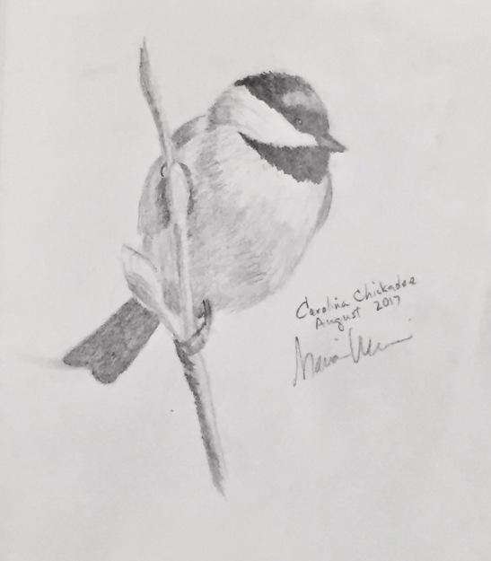 Marian Wiseman Carolina chickadee
