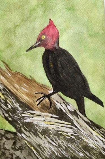 Hattie Babbitt watercolor