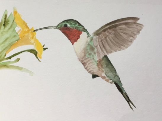 2017 Ruby-throated hummingbird
