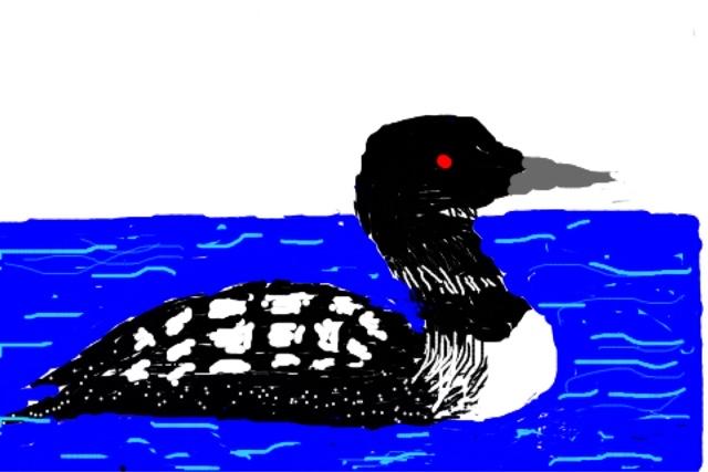 Eileen Leahy Common Loon (summer plumage)-1