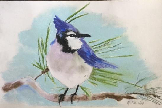 Anne Shields Blue jay pastel