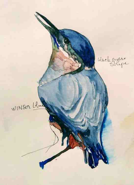 Linda Norton Nuthatch 1