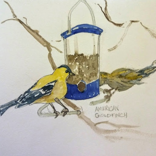 Linda Norton American goldfinch watercolor