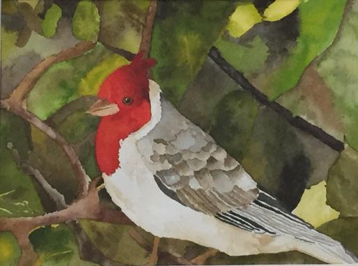 2014 06 Brazilian cardinal