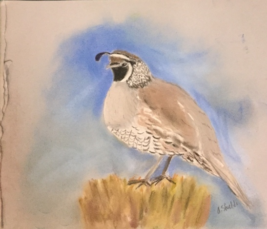 Anne Shields California Quail
