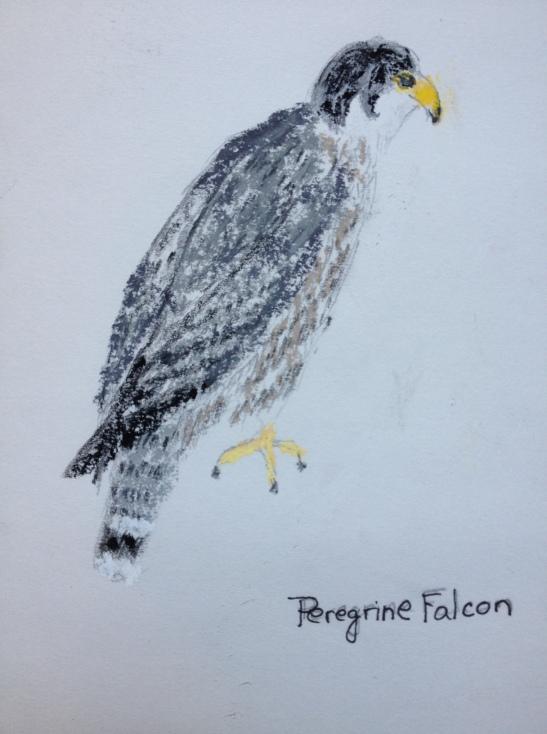 Eileen Leahy Peregrine Falcon