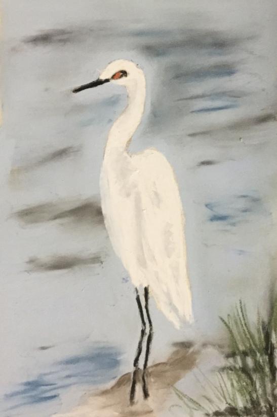 Anne Shields Snowy Egret Cape Cod pastel