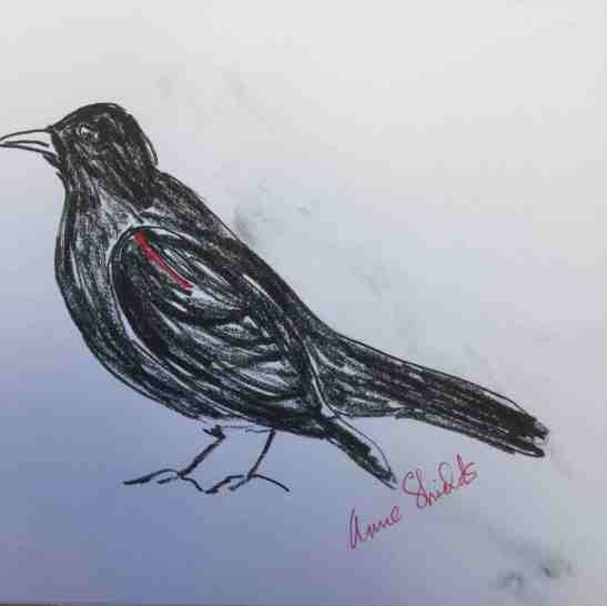 Anne Shields Red-Winged Blackbird Pen and Pencil
