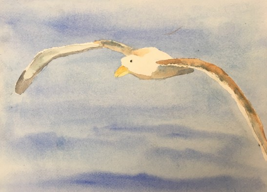 Carolyn rondthaler albatross watercolor