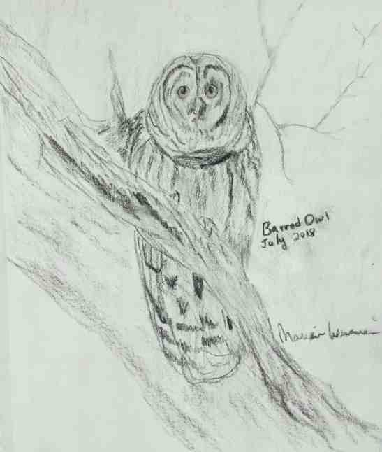 Marian Wiseman Barred Owl Charcoal