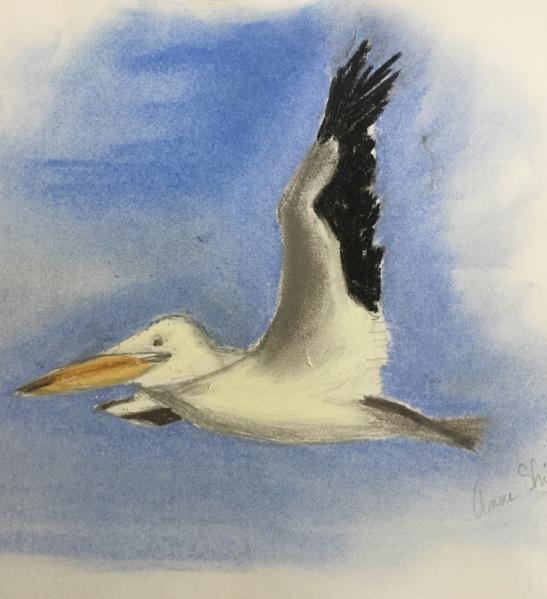 Anne Shields Missouri River Pelican Pastel