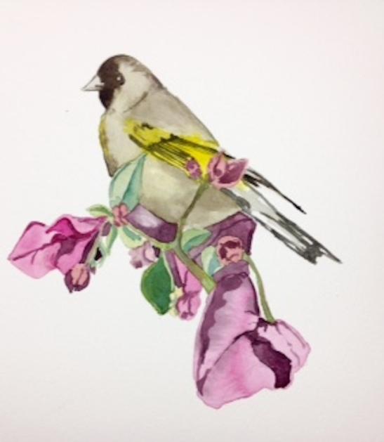 HamiltonFinchWatercolor