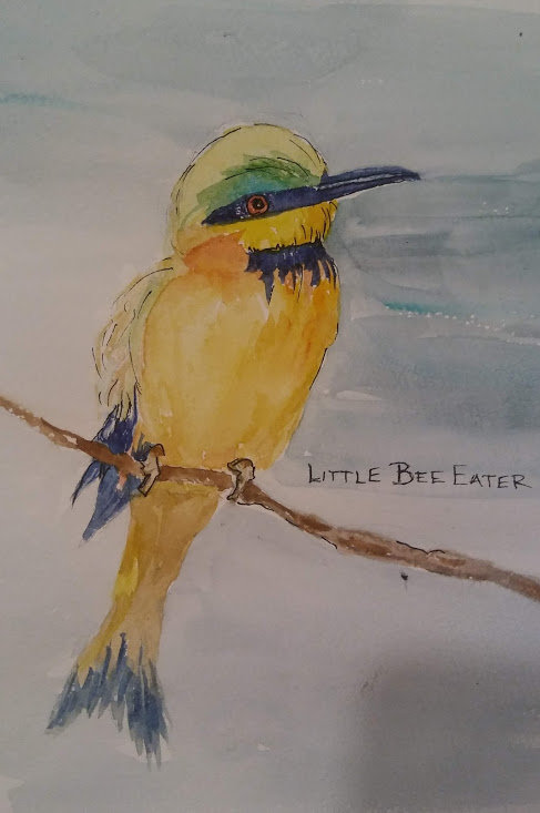 Linda Norton Little Bee Eater