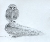 Pat Stocks: Baby Owl. Pencil.